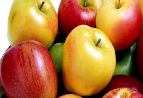 Apple for export
