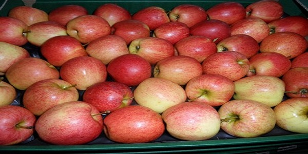 apple fruit for sale