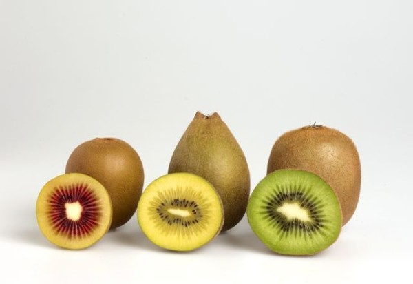 buy golden kiwi fruit
