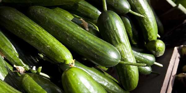 Cucumber importing countries