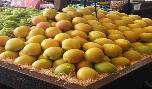 Mango price in the world market