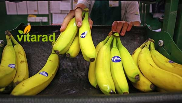 Banana's price in Ecuador