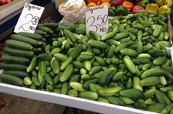 Buy cucumbers for pickling
