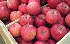 today price of apple fruit