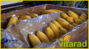 Banana Export from India