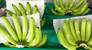 Banana exports to Iran from India