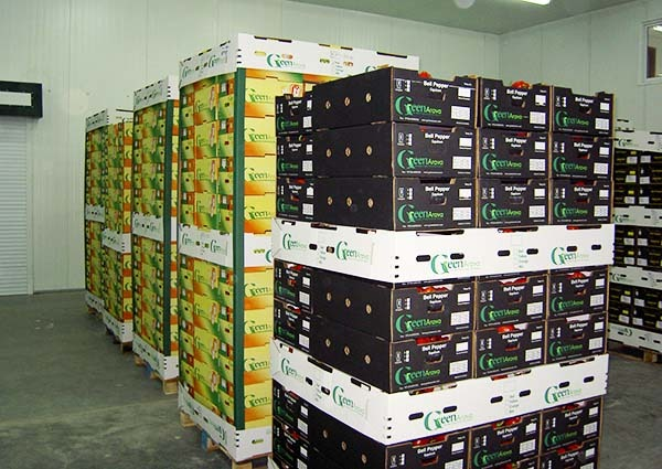Bell pepper export from Iran