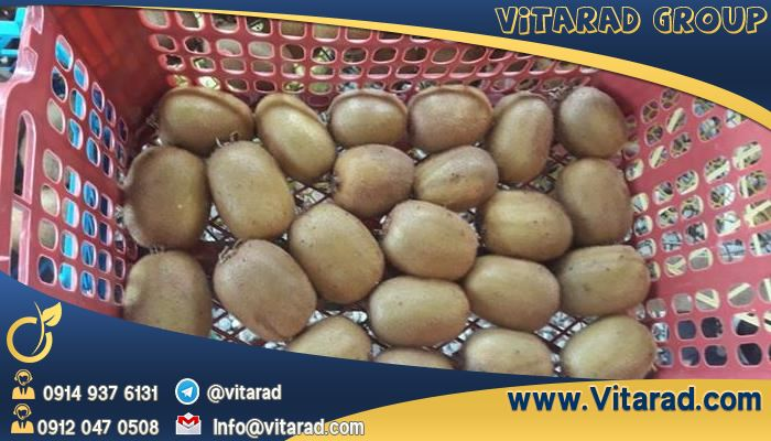 Best Kiwi supplier in Iran