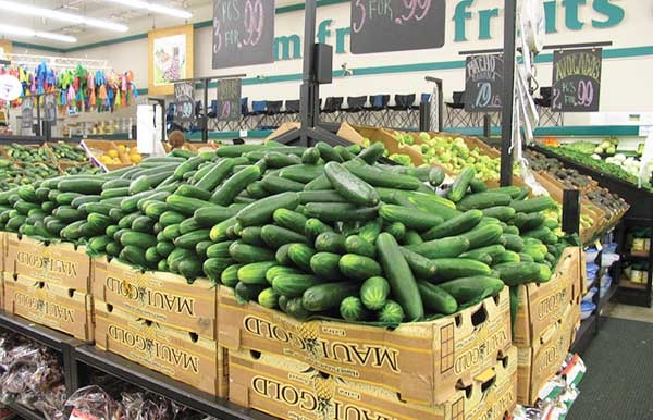 Persian cucumber for export
