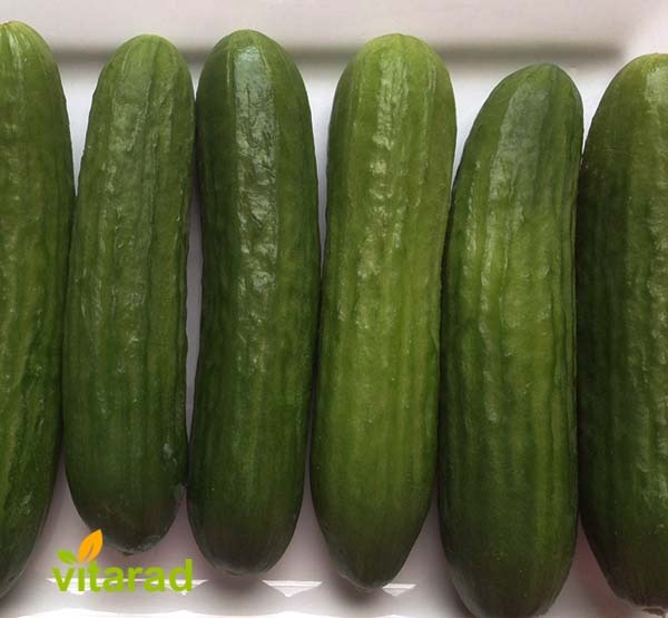 Persian cucumber varieties