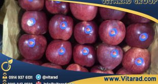Red Delicious apple price in Iran