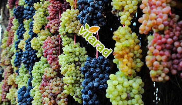Sell Urmia grape to Russian buyers - vegetable