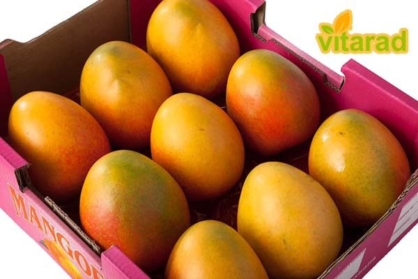 Mango export from India