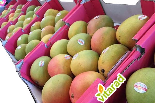 mango export from India to Iran
