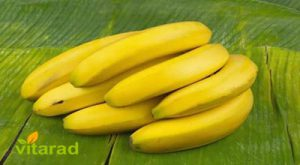 Banana export price