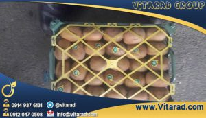 Buy Iranian kiwi fruit for exports
