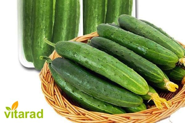 Persian cucumbers for pickles