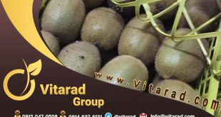 Famous kiwi exporters in iran