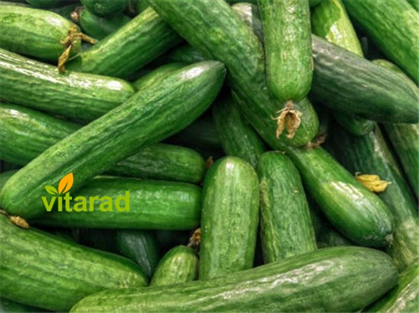 Wholesale cucumber prices