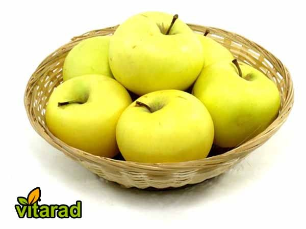 yellow tree apple for sale