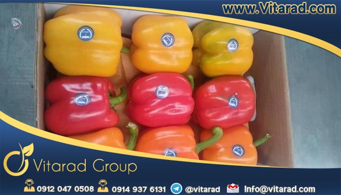 Export of sweet pepper to Russia