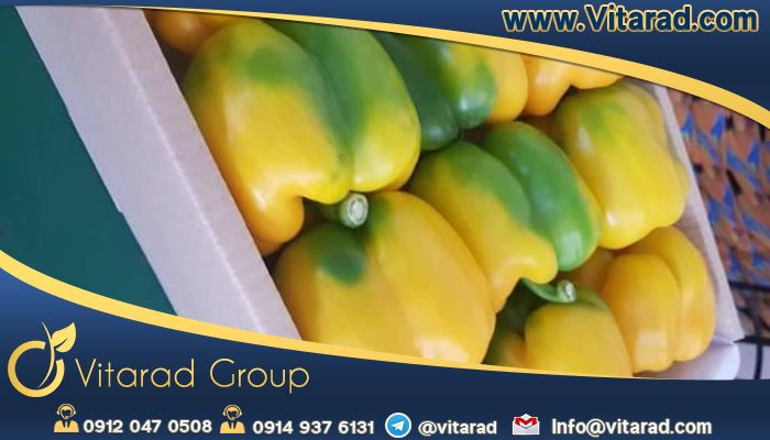 Export of yellow bell peppers from Iran