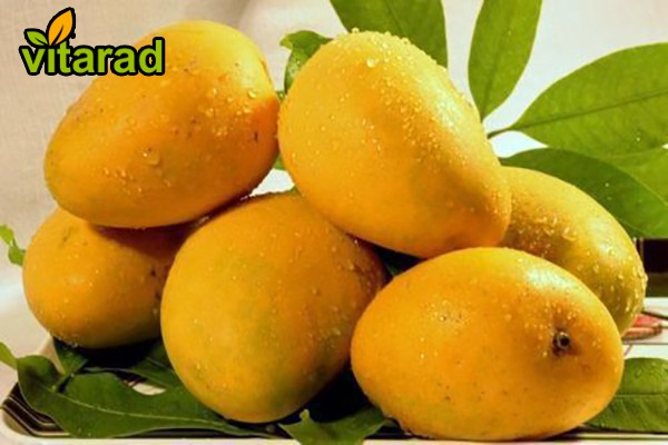 Pakistan mango export
