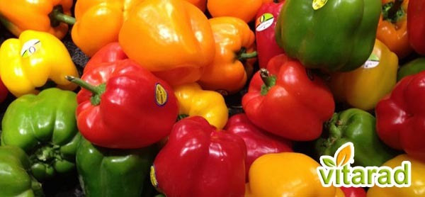 Sweet pepper exports