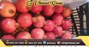 Buy black pomegranate seeds from iran