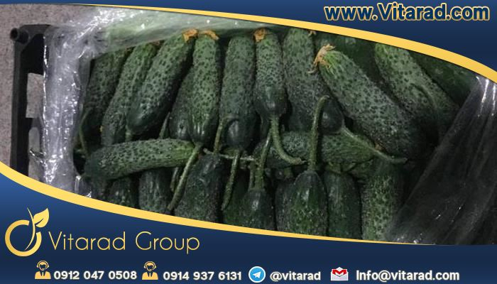 Cucumber exports to Iraq