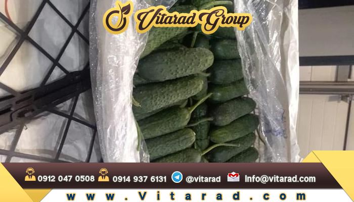 Persian cucumber exports to Iraq