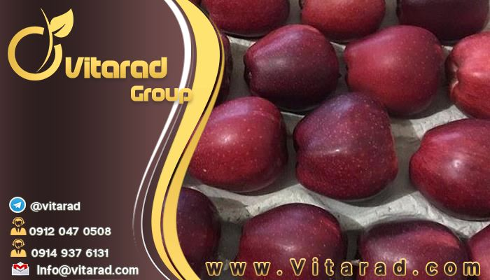 Iranian red apple tree export