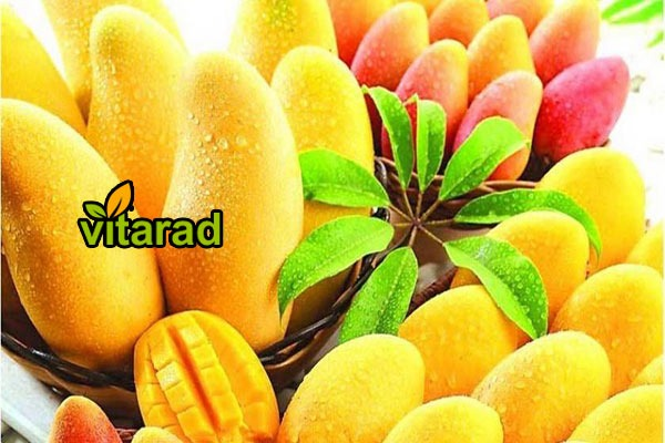 Zahedan Yellow Mango