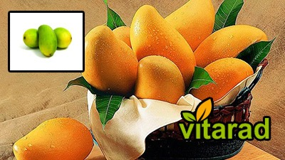 Import mango from Thailand to Iran - vegetable