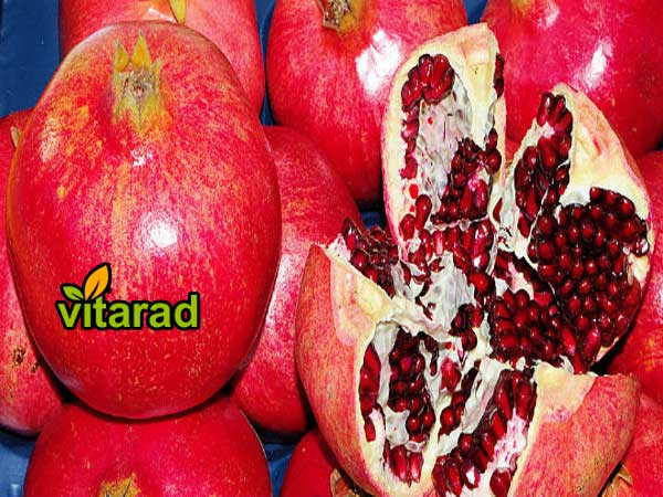 Pomegranate wholesale market
