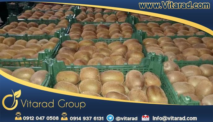 Wholesale Hayward green kiwifruit