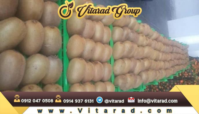 High volume production of Hayward green kiwi in Iran