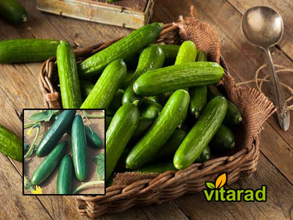 Buy Persian cucumbers