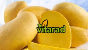 Export of yellow mangoes