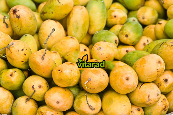 Export of yellow mangoes to the Middle East - vegetable
