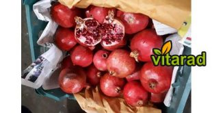 Export red pomegranate