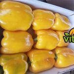 Exporting bell pepper