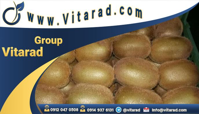 Sorting and packing kiwi for export