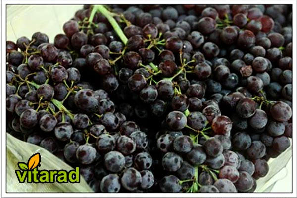 Iranian grape prices