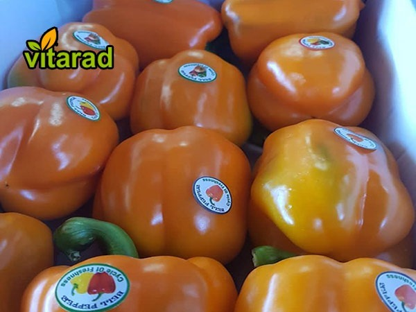 Orange bell pepper export