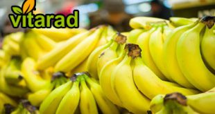Philippine banana prices