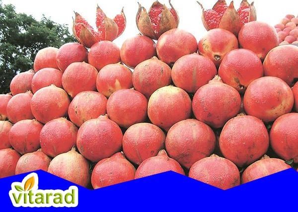 Pomegranate for sale