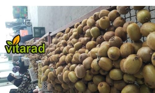Purchase price of the Golden Kiwi