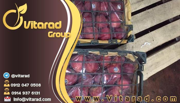 Wholesale of Iranian fresh apples for export