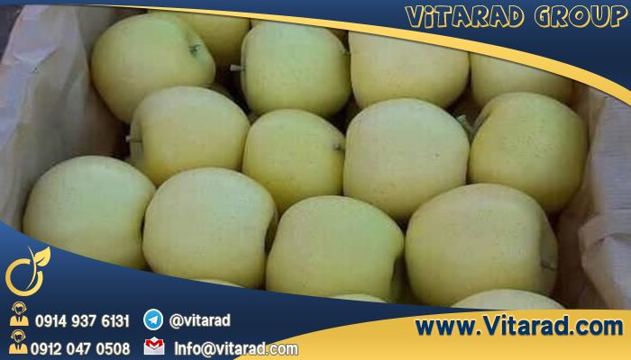 Export of fresh and delicious apples from Iran